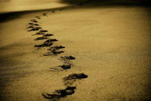 Nærvær, Vilje og Spiritualitet